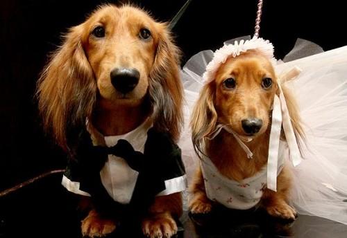 boda-perros-ap-e1342292564997