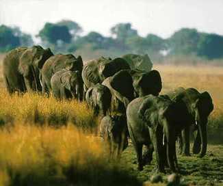 colores-de-boda-safari-novios