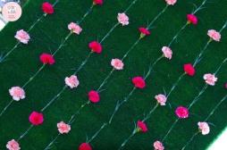 colores-de-boda-photobooth-cesped-claveles-flores