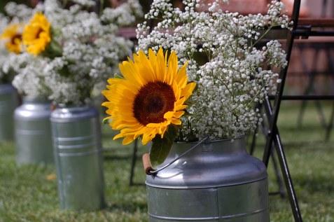 colores-de-boda-36-lecheras-paniculata-girasoles