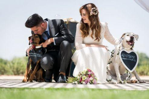colores-de-boda-perro-zankyou-abrazo-animal-7